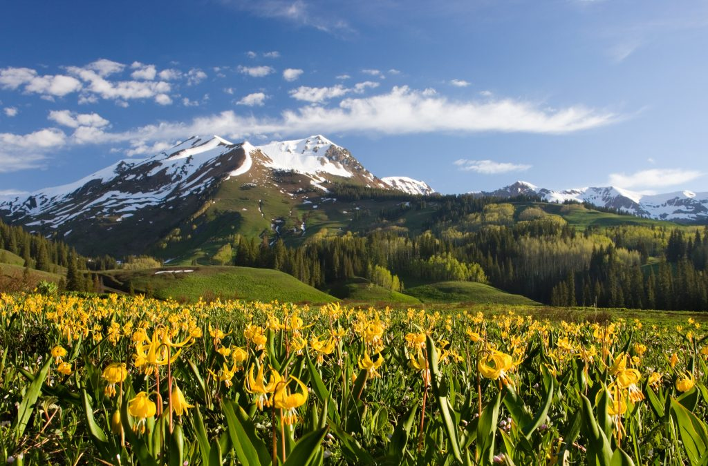 Mount Avery and Glacier Lilies near Crested Butte, CO.  No pandemics and a beautiful earth go together.  But we are destroying our earth and many pandemics are in our future.    How to stop the next pandemic?