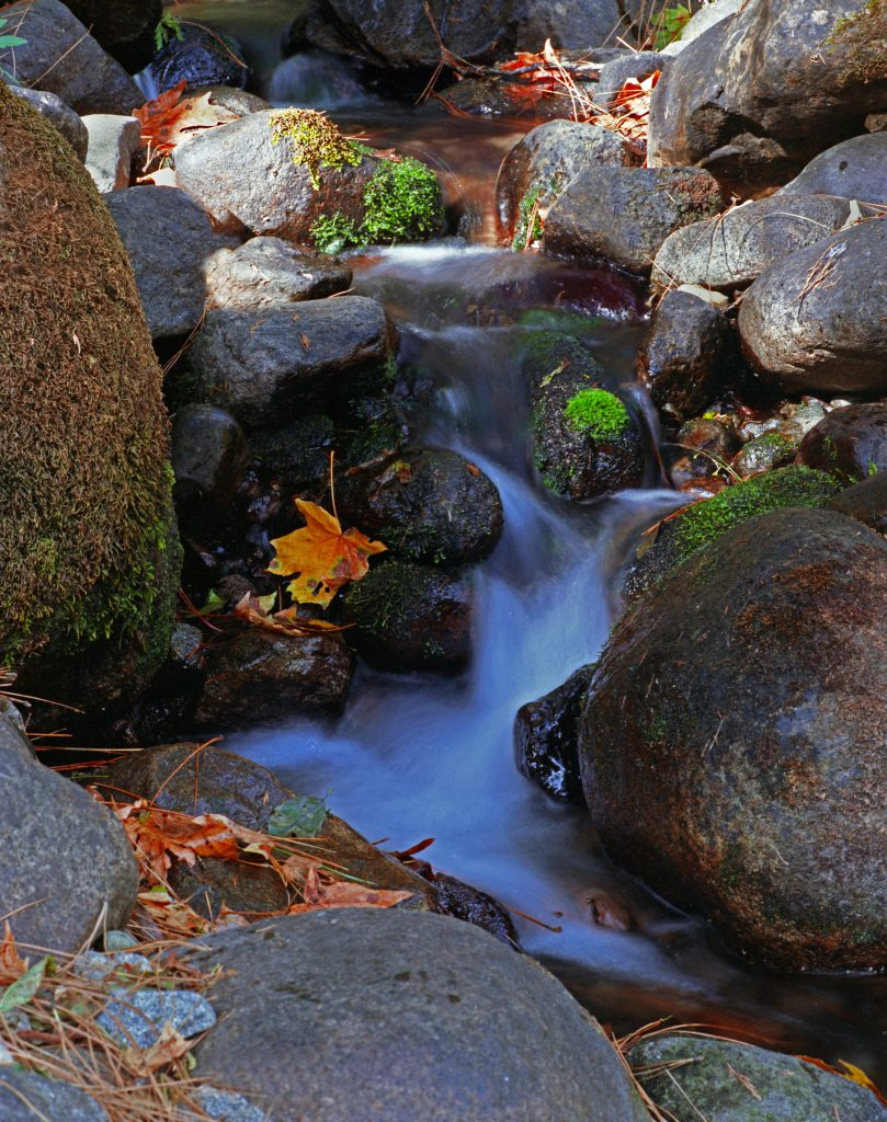 Creek and autumn leaves in Yosemite National Park.   Is big oil lying to us about zero-emissions?  If so, this could prevent us from saving places like this.