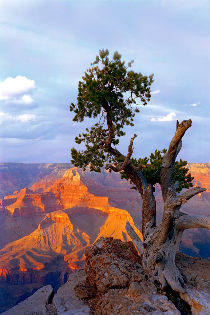 Grand Canon snag and sunset
